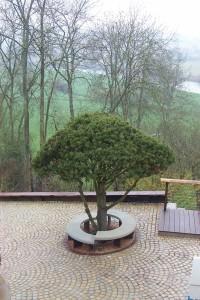TREE 2005-02-17 0072